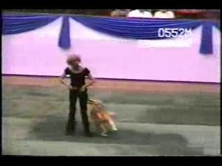 A dança do cachorro