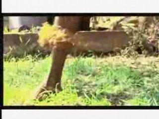 Skol '07- Koffi Olomide: SWI