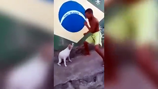 In Brazil, even the dogs are great dancers.