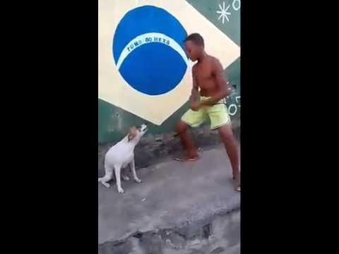 Dog in Brazil dancing to the beat